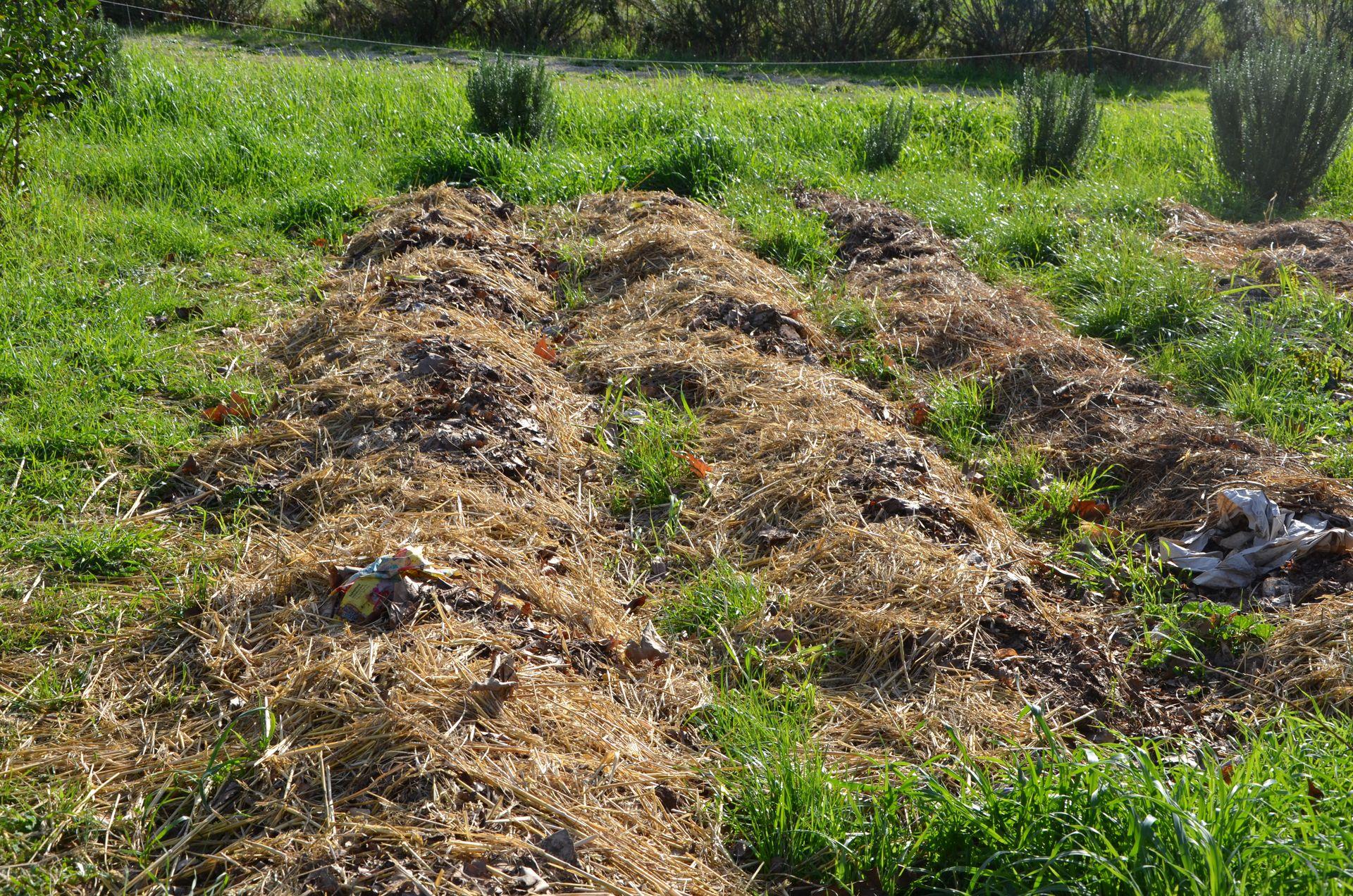 Paillage jardin potager top paillage de chanvre with - Pomme de terre sous paille ...